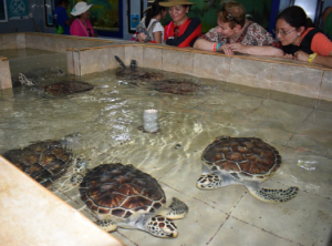 The Turtle Farm protects turtles from when they first hatched through their re- Cliff of the Dawn is the eastern most part of Mexico. Zip lining over the Caribbean Sea is one of the main attractions at Garrafon Park..