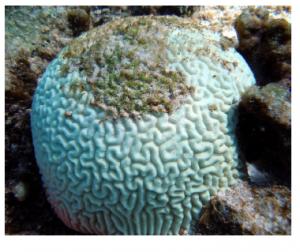 Cancun coral