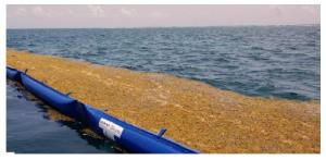 Cancun seaweed